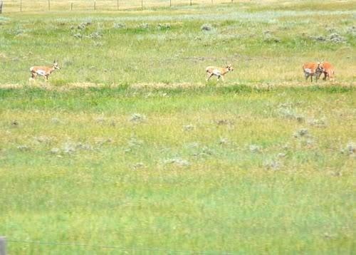 PCS Days 8 through 11 | Wyoming, Montana, Idaho and Washington State