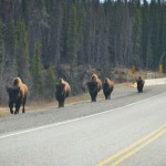 PCS 2013: Day 4 | To Fort Nelson, British Columbia #Wildlife