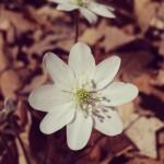 Spring in Alabama