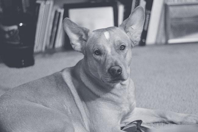 Duke | Our New Family Member - Cosmopolitan Cornbread