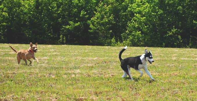 Run Doggies, Run! | Our new afternoon routine from Cosmopolitan Cornbread