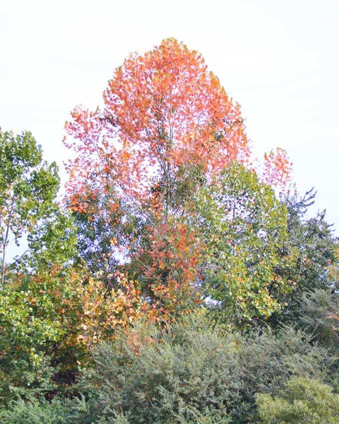 Autumn Already? |  Cosmopolitan Cornbread