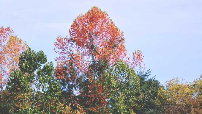 Autumn Already?