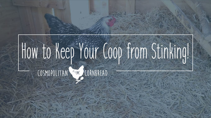 How to Keep Your Chicken Coop from Stinking