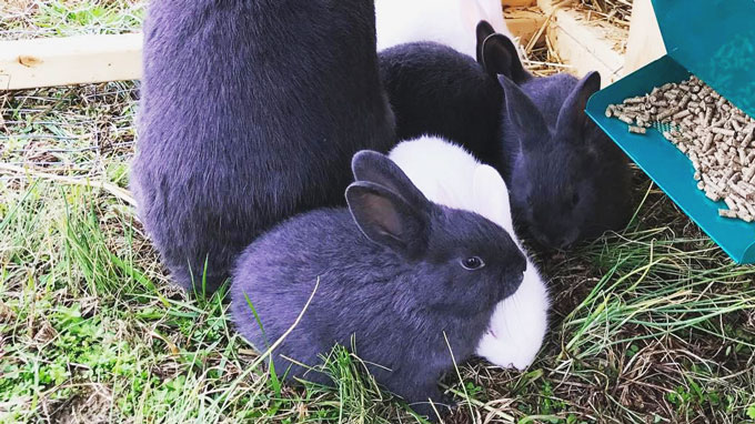 How to Keep Your Rabbits Cool in the Summer Heat