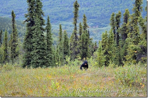 Berry Picking on the Tundra | Cosmopolitan Cornbread