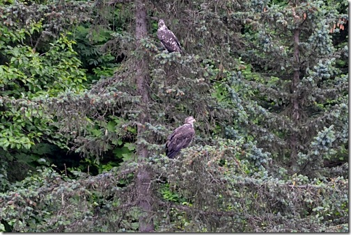 The Eagles in Valdez, Alaska | Cosmopolitan Cornbread
