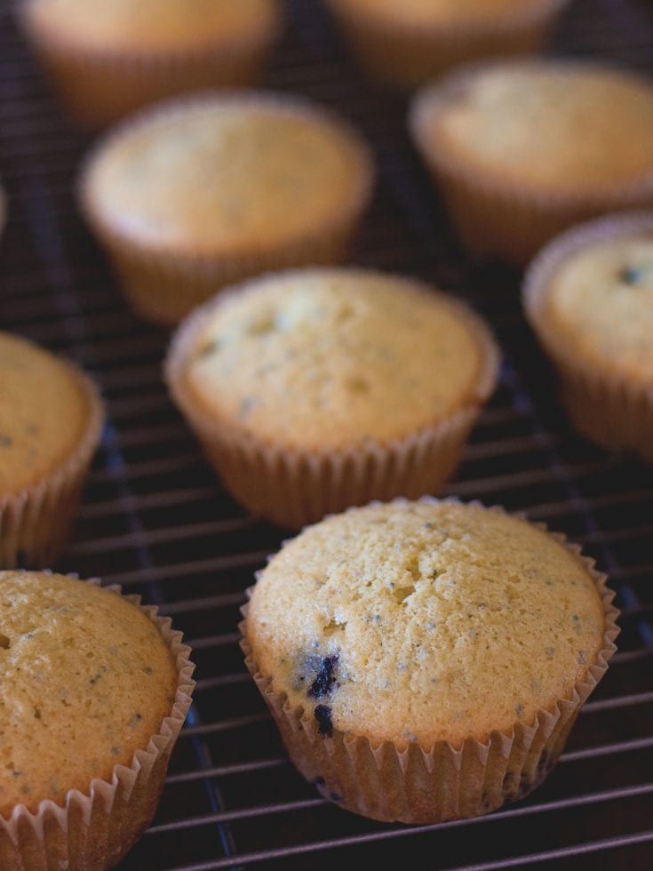 Blueberry Poppyseed Muffins