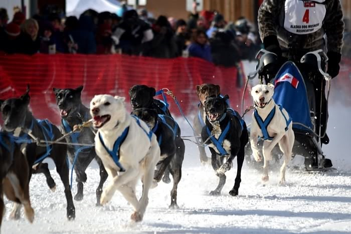 North American Sled Dog Race
