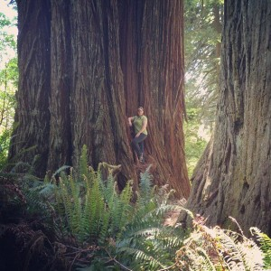 The Great Redwood Forest