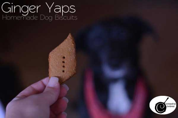 Ginger Yaps | Homemade Dog Biscuits