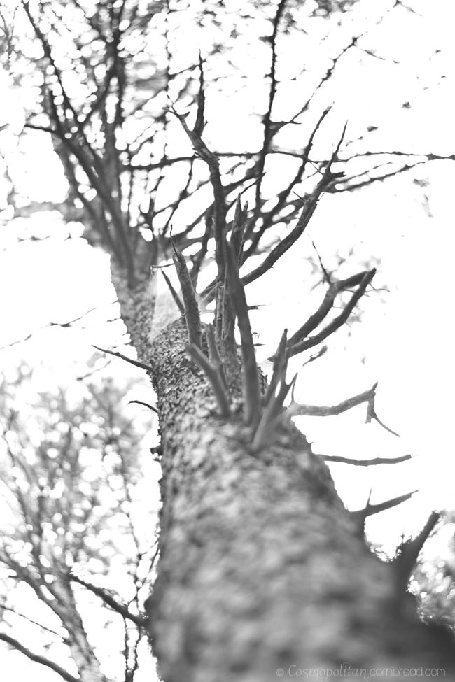 Green Mountain - Photographs by Constance Smith, CosmopolitanCornbread.com