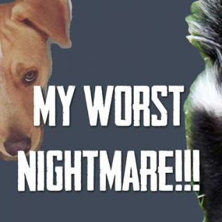 My Worst Nightmare – Duke vs. a SKUNK! | Vlog