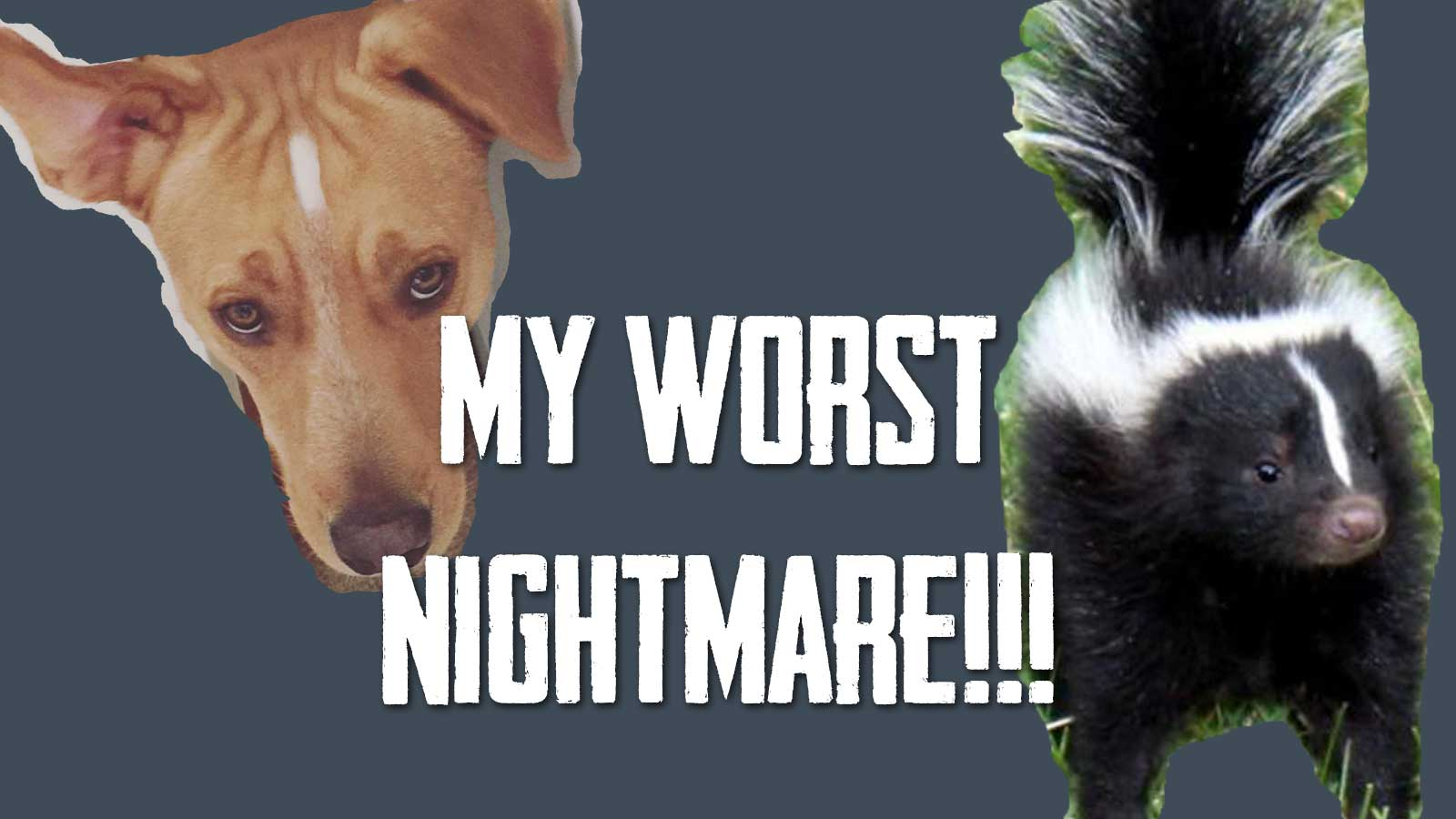 My Worst Nightmare! Duke vs a SKUNK! | The latest vlog from Cosmopolitan Cornbread