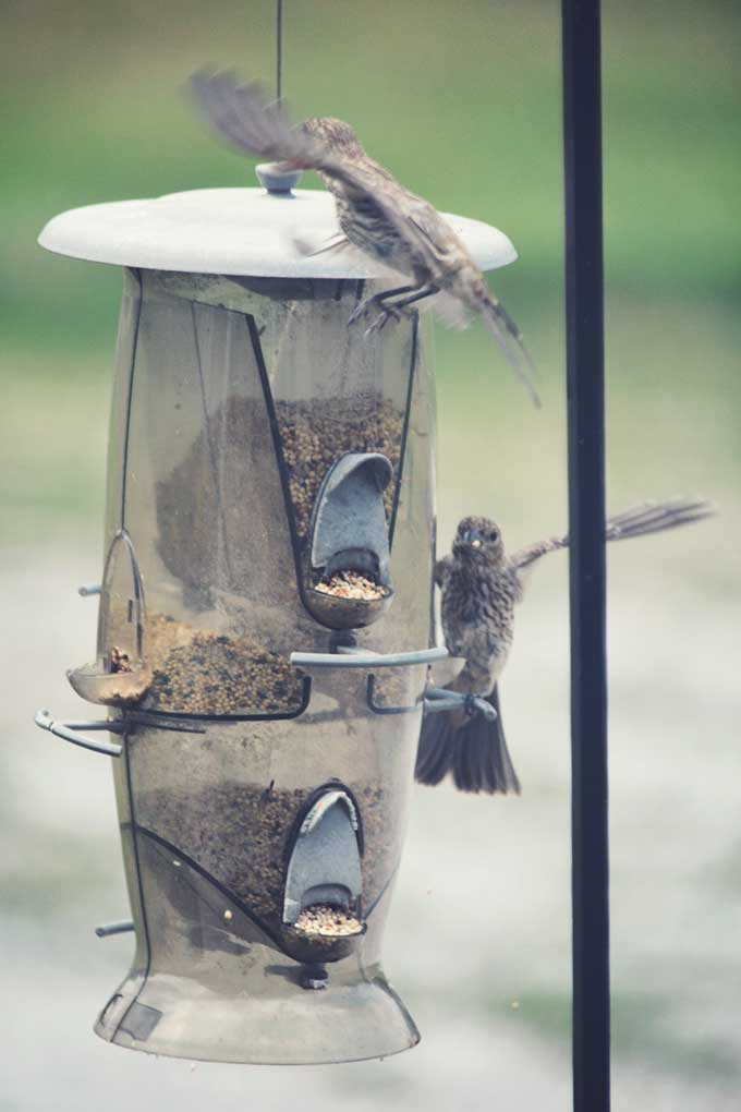 Wordless Wednesday: The Birds | A Photography post from Cosmopolitan Cornbread