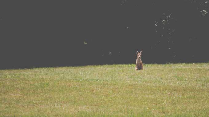 The Mangy Coyote | Cosmopolitan Cornbread