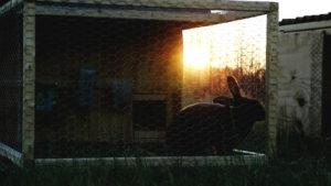 A Tour of my Rabbit Tractor | Cosmopolitan Cornbread