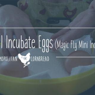 How I Incubate Eggs – Magic Fly Mini Incubator