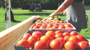 How to easily remove Tomato Skins | Cosmopolitan Cornbread