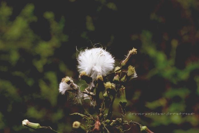 Dreams of Spring | Cosmopolitan Cornbread
