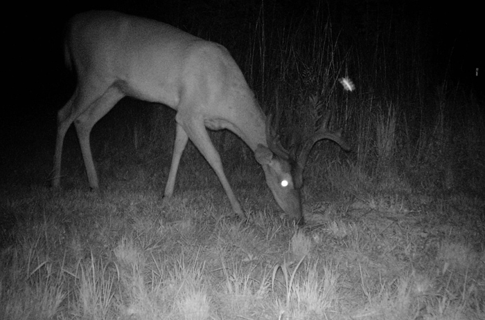 Trail Cam Happenings: By request, another montage of night time happenings from one of our cameras. LOTS of wildlife in this one!