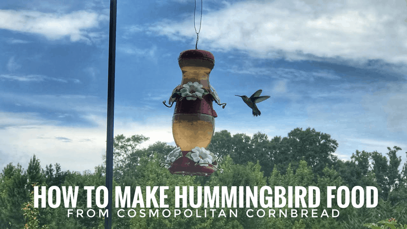 How to Make Hummingbird Food