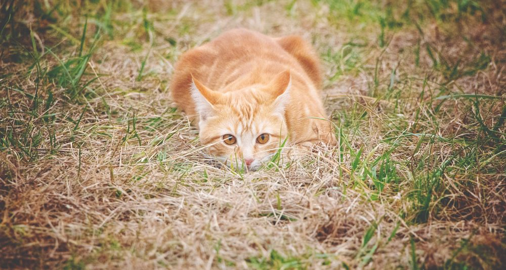 She's a good hunter, but is this farm cat too good at what she does?   Cosmopolitan Cornbread TV