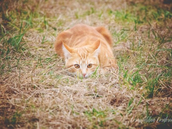 She's a good hunter, but is this farm cat too good at what she does? | Cosmopolitan Cornbread TV