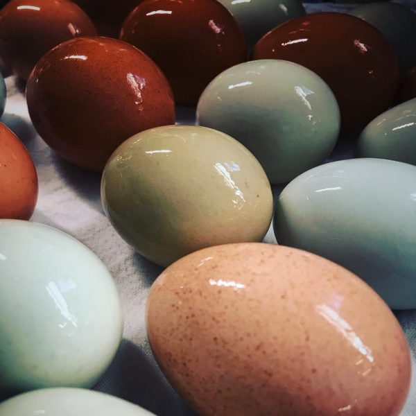Some of our freshly washed eggs.