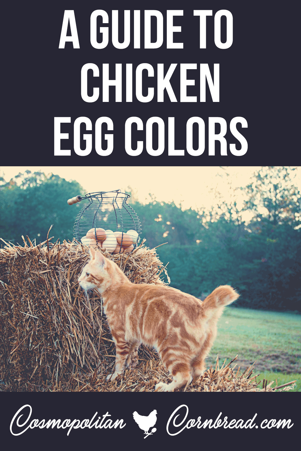 A Guide to Chicken Egg Colors - Why do chickens lay different colored eggs? Learn the simple reason for different colors in the egg basket.