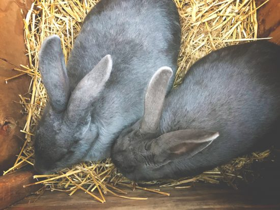 "Today I shared something that absolutely broke my heart. Then, I talked abut something important to know about breeding rabbits, as well as shared a few other tidbits, like dealing with ""dumped"" animals."