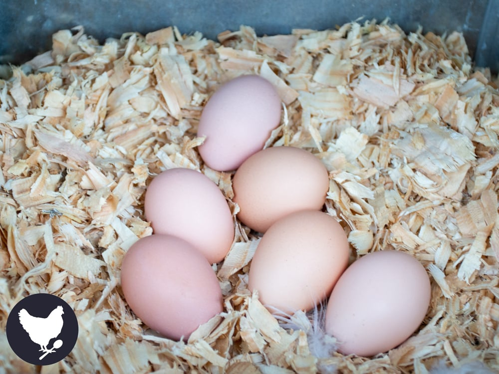 How to Set Up Nesting Boxes for Your Chickens