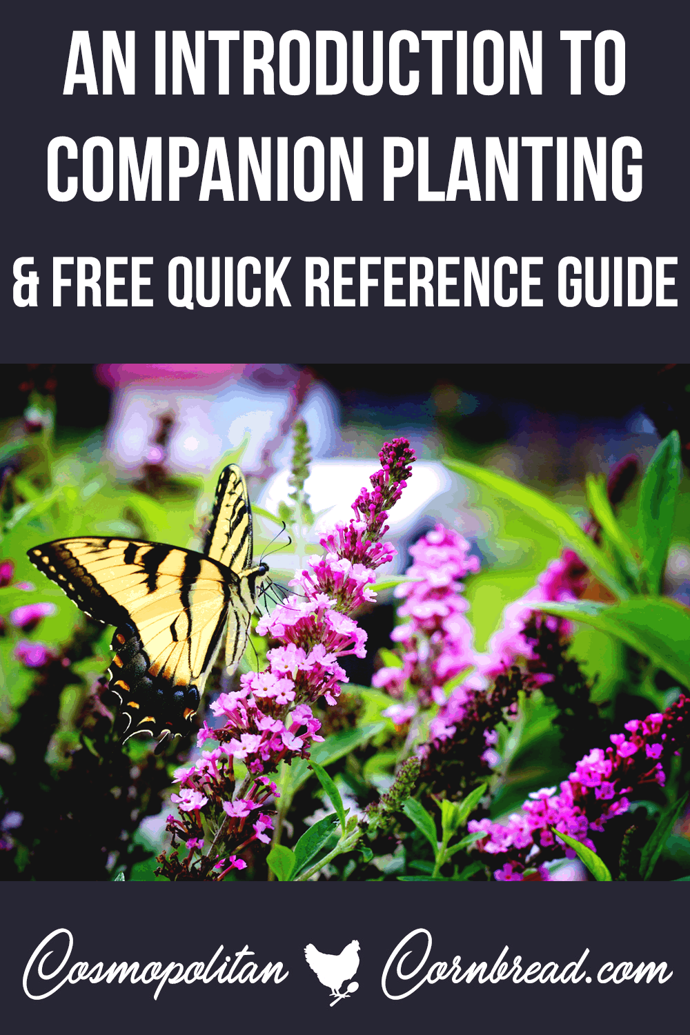 An Introduction to Companion Planting - with FREE Quick Reference Chart from Cosmopolitan Cornbread
