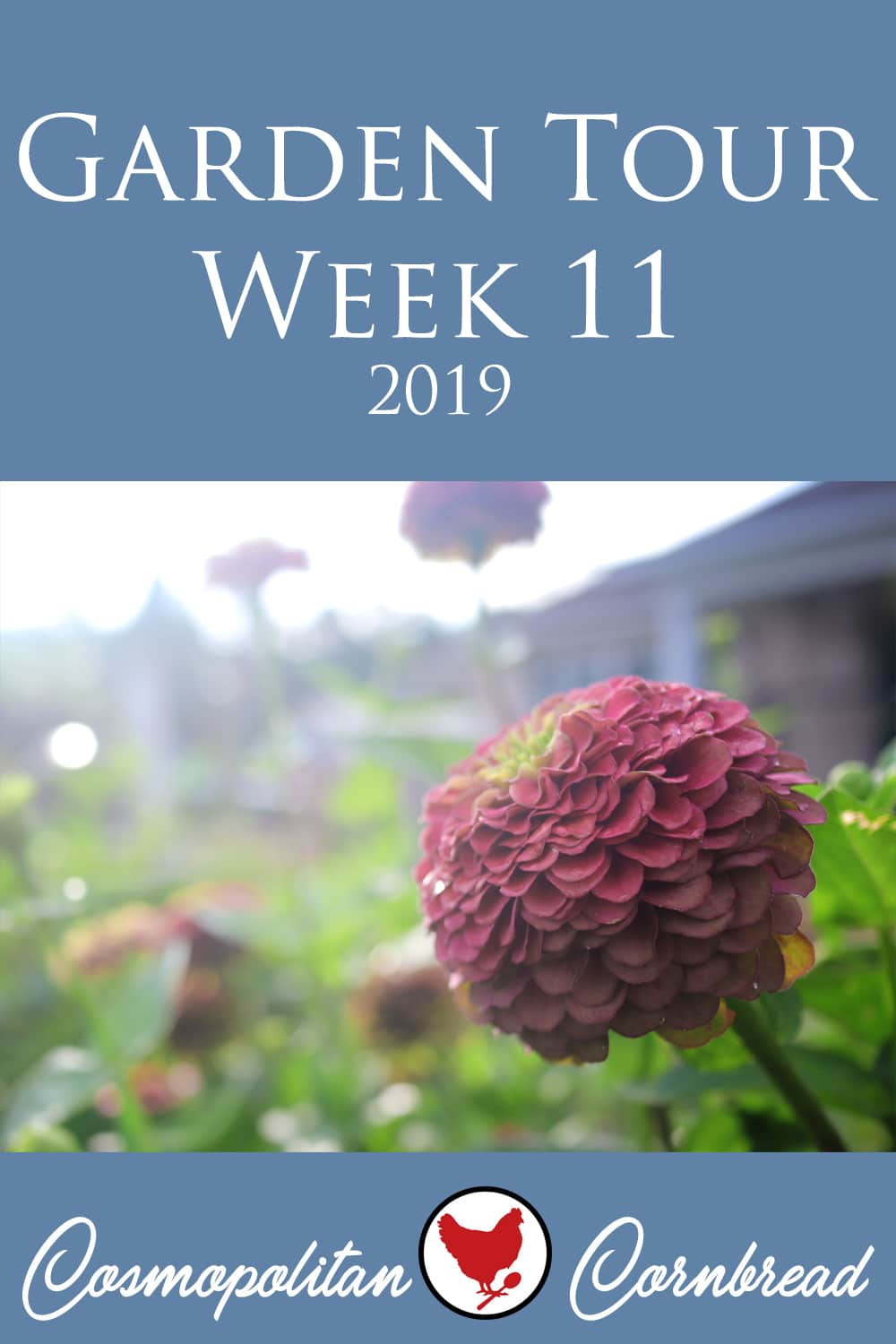 My schedule got a little thrown off this weekend, so today for the Monday episode, I'm sharing the week 11 garden tour. Better late than never!