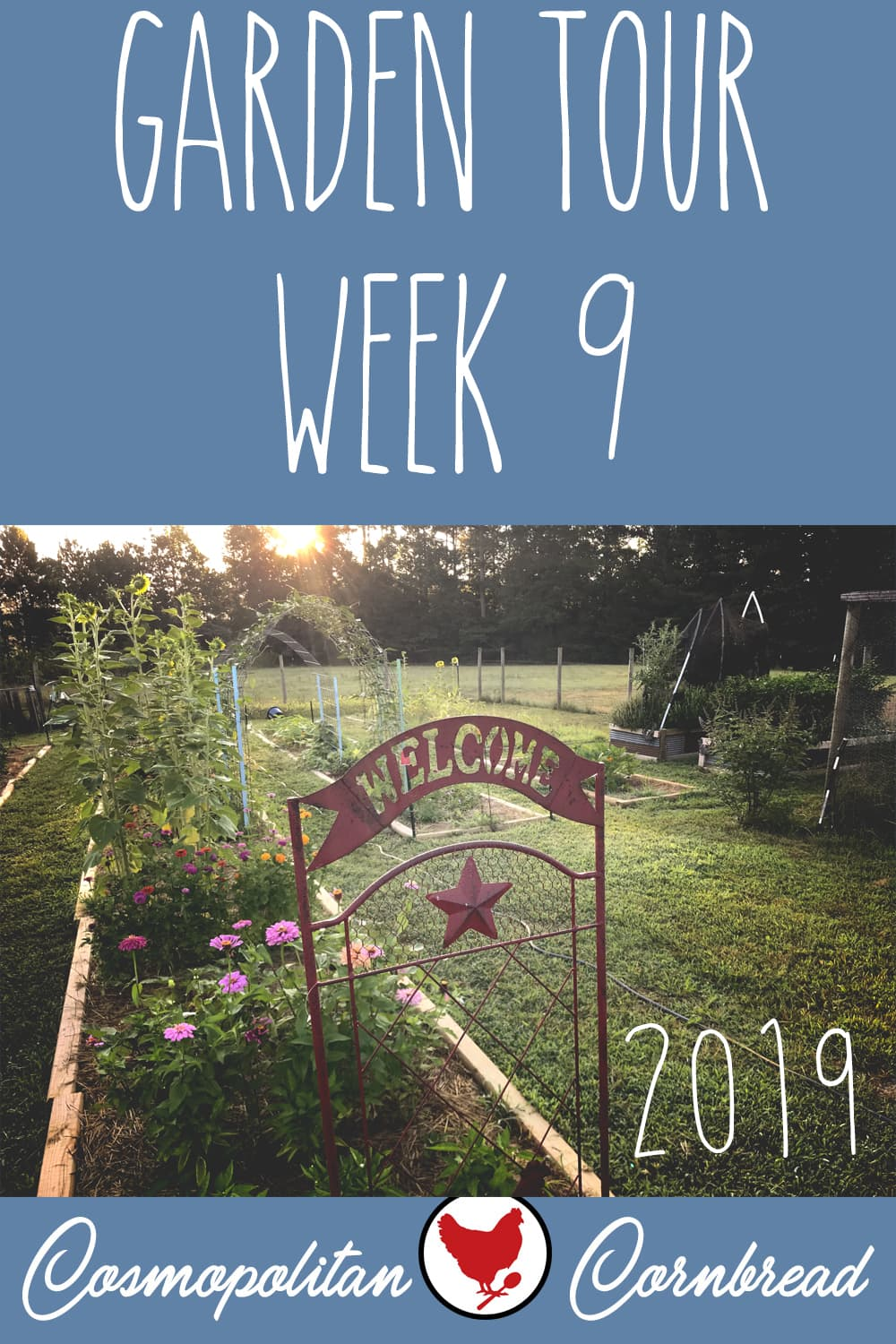 Week 9 of our potager garden, here in zone 7b. Many things are doing well, some things are struggling in the heat, and we have a garden invader that I discovered during the tour!
