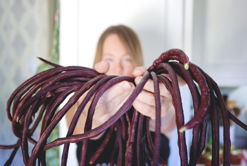 We got our very first Chinese Noodle Bean Harvest, EVER. Then I shared what I use (and don't use) for harvesting in the garden.