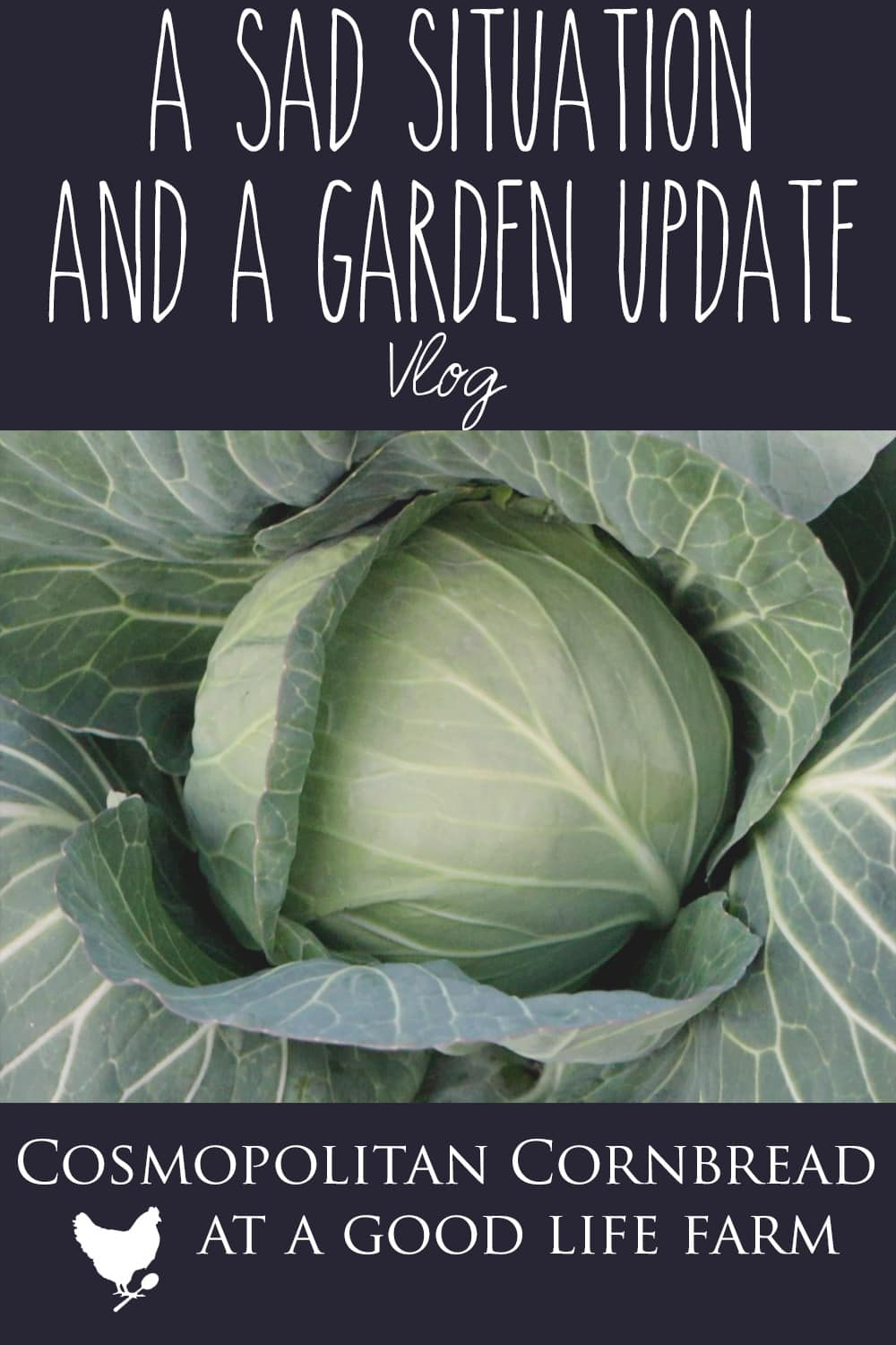Heading out to do afternoon chores, and in the winter we have to do things a little bit differently. I also shared a some things I will be doing for the garden this coming year and how a couple things in the winter garden are doing.