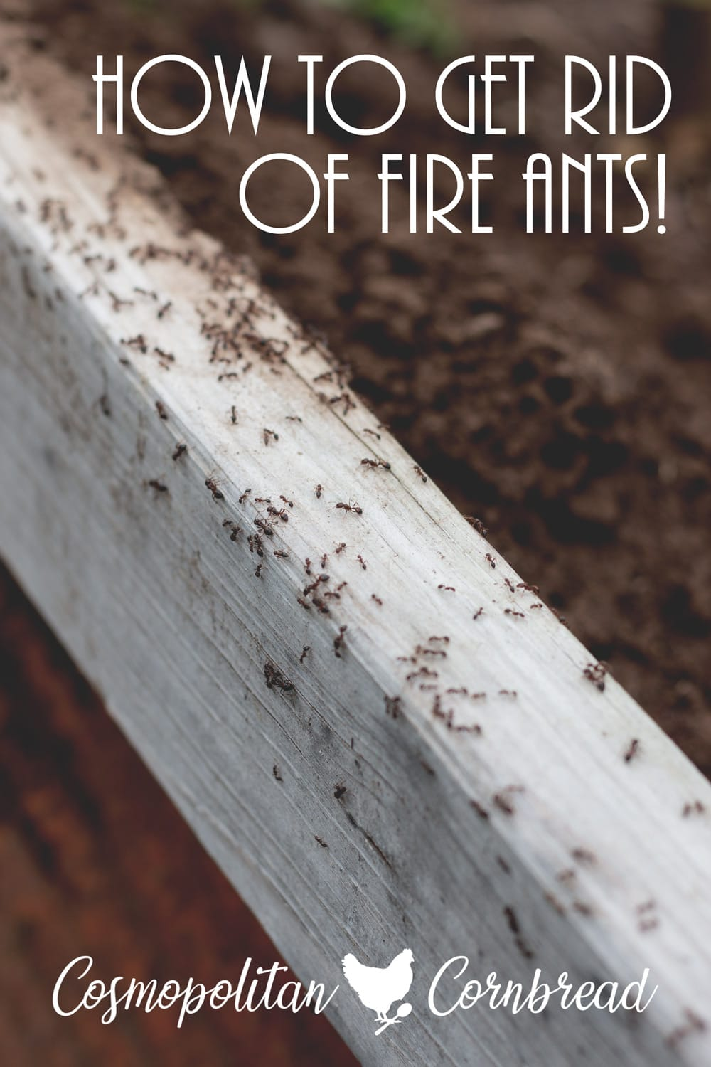 How to Get Rid of Fire Ants - Flower Beds, Garden Beds or even the Yard. Safely and Naturally. Find out how on Cosmopolitan Cornbread.