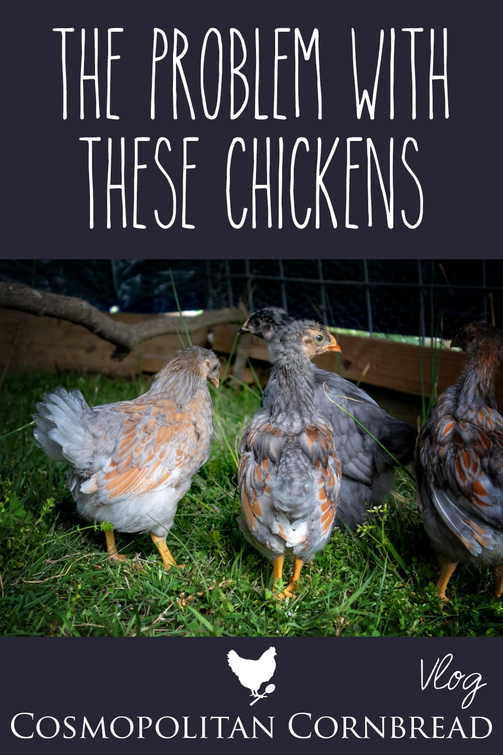 We are getting ready for another batch of chickens to come this week, so it was time to move the pullets on out! Also....#ChickenProblems :)