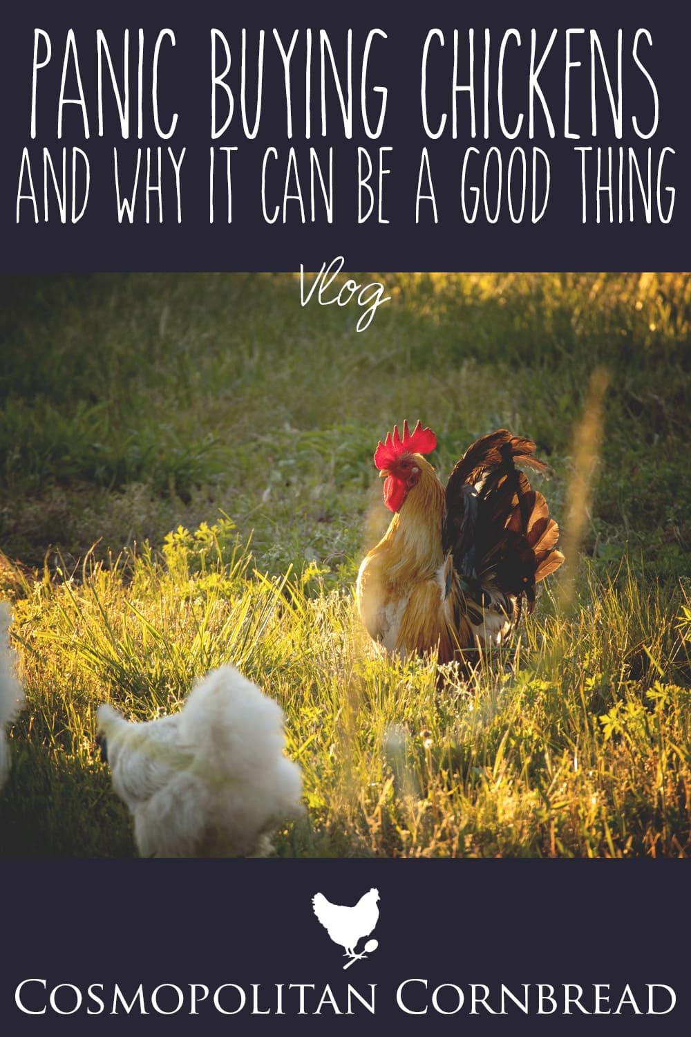 Today I shared the progress we have made on the new chicken coop. And then...panic buying chickens - and why I think it can be a good thing.