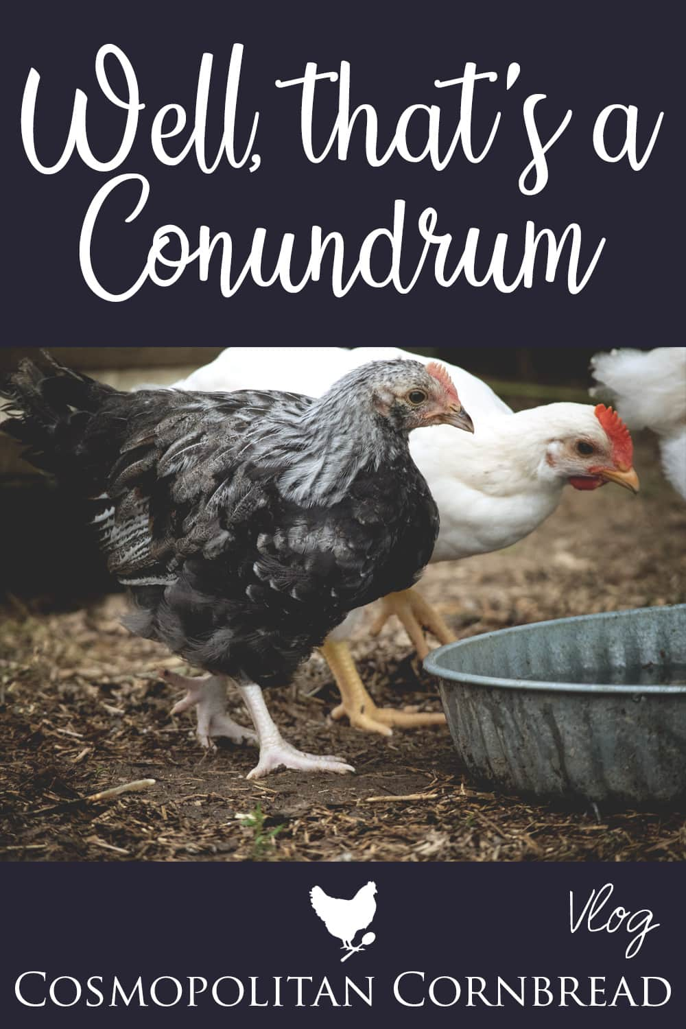 Today I shared a few discoveries I made about our new chickens....and what I'm going to do about it.
