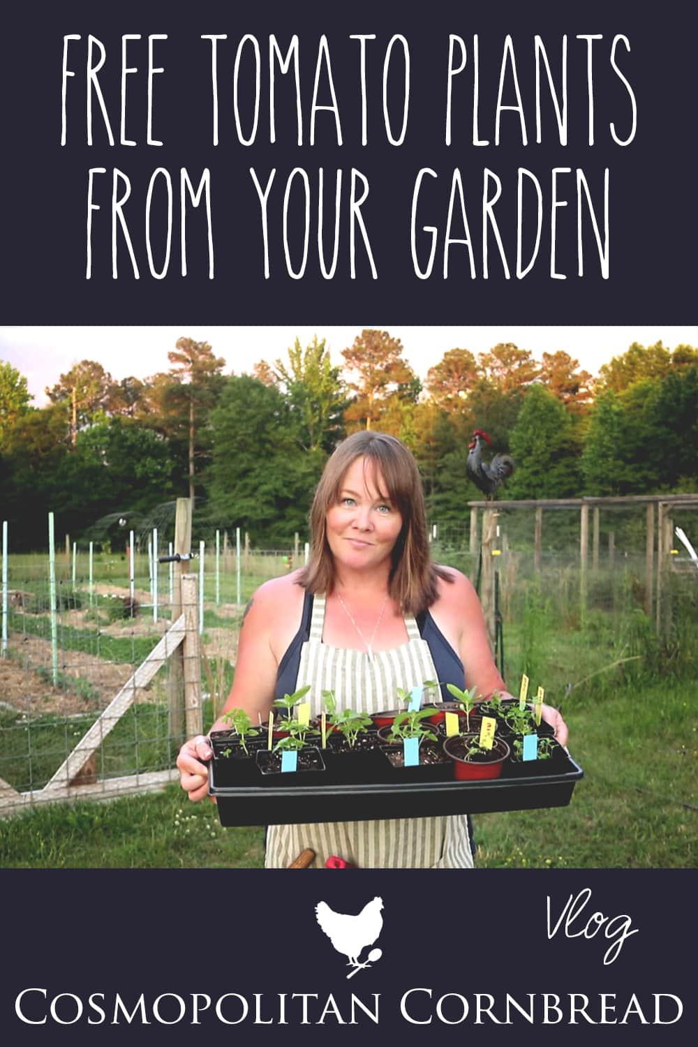 I received a lovely gift from a friend, then I headed out into the garden and shared how you can pretty much have an unlimited supply of tomato plants for FREE.