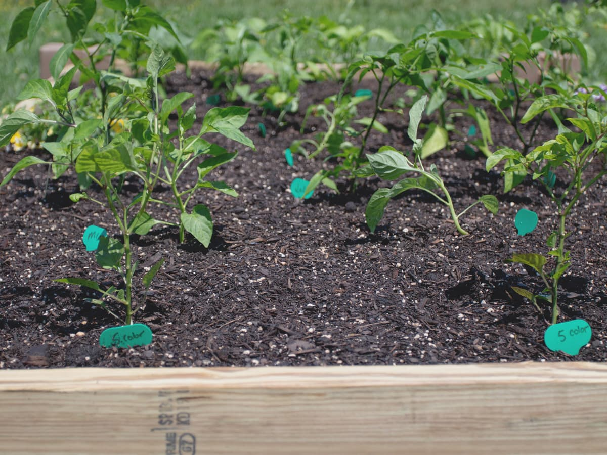 How to Build a Raised Garden Bed in 5 Minutes! | An easy gardening project from Cosmopolitan Cornbread.