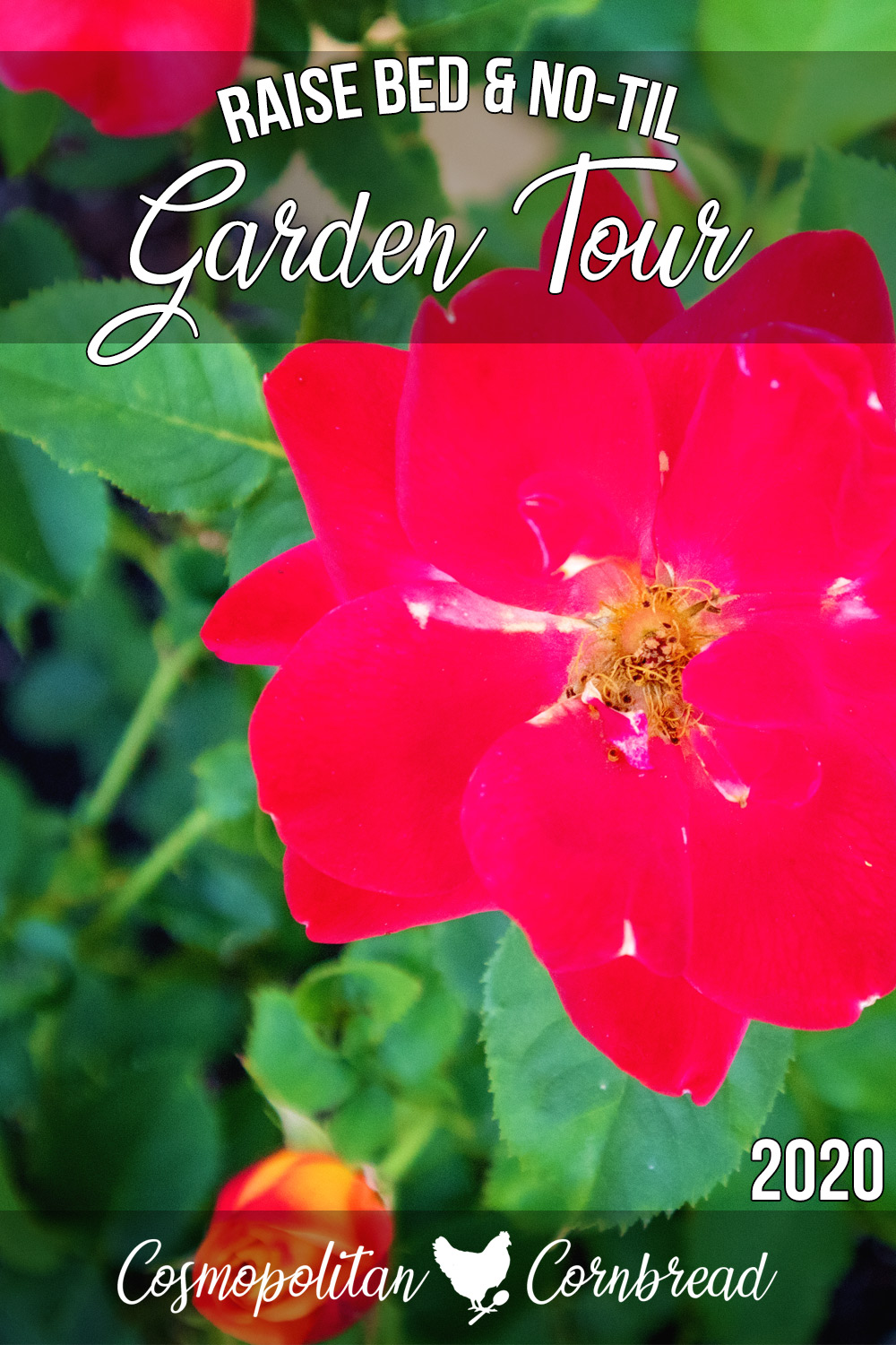 Join me for the week 7 garden tour in northern Alabama, garden zone 7b.