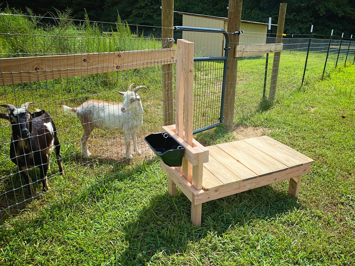 How to Build a Goat Stanchion | Cosmopolitan Cornbread