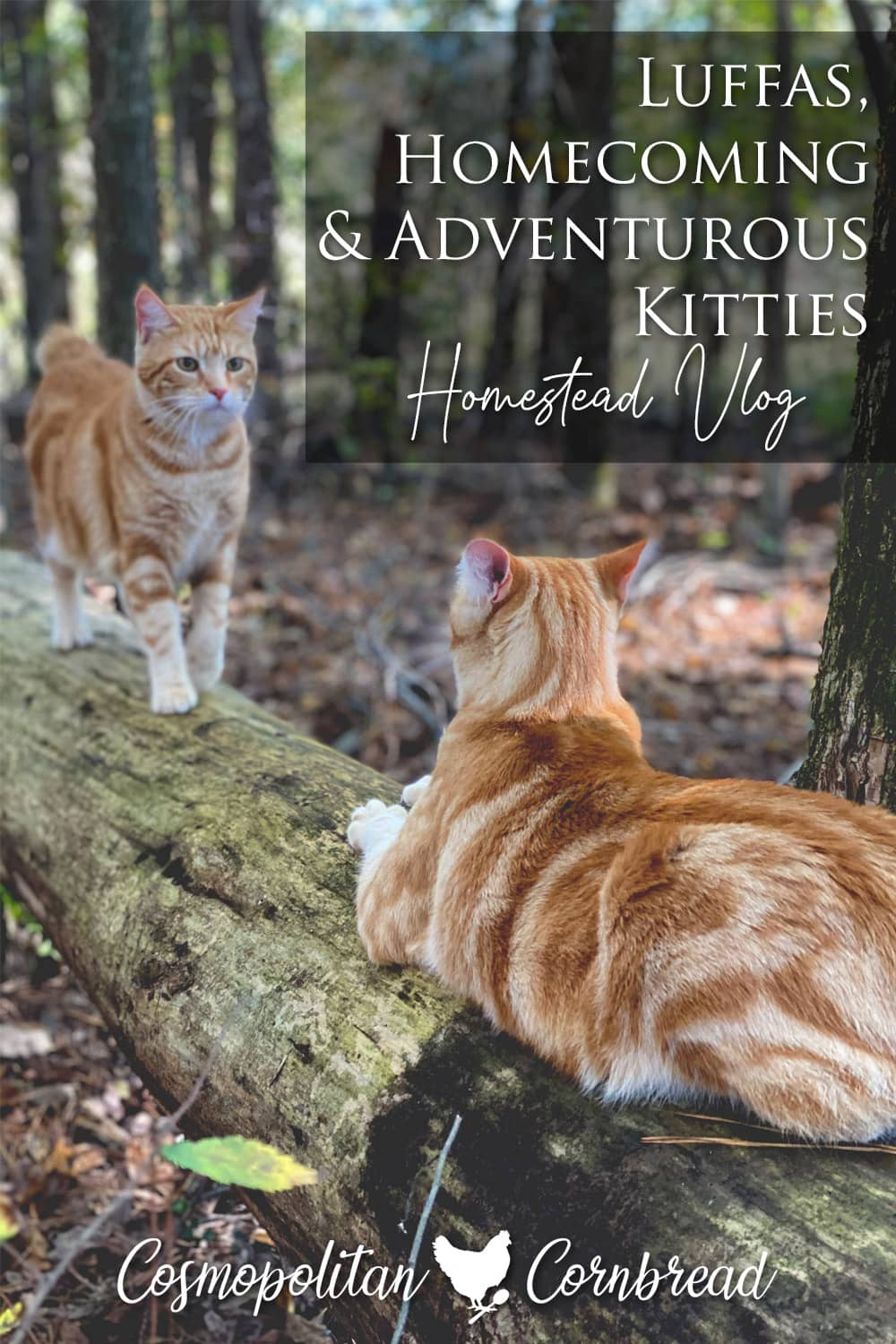 Luffas, Homecoming & Adventurous Kitties | Homestead Vlog - Come along with us as we do some pre-hunting season checks...with some furry tag-a-longs.