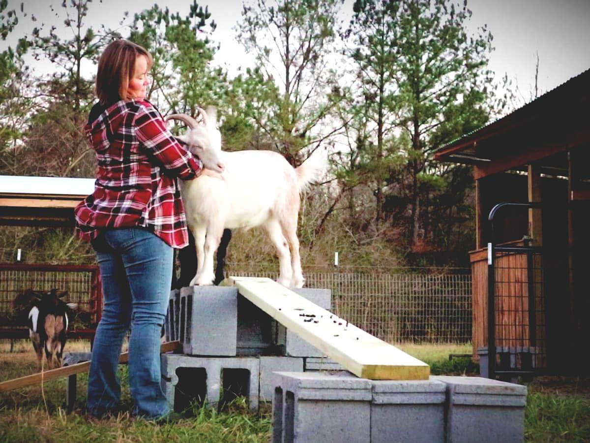 Goat Problems