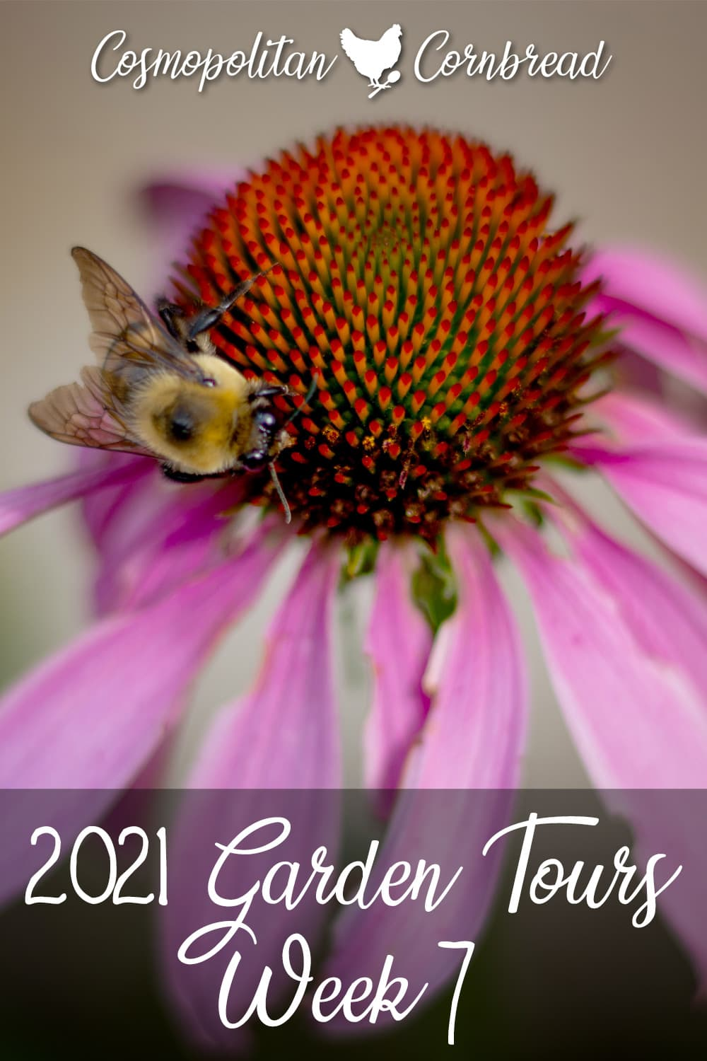 A lot has happened since the last garden tour. Come see how the gardens are growing.