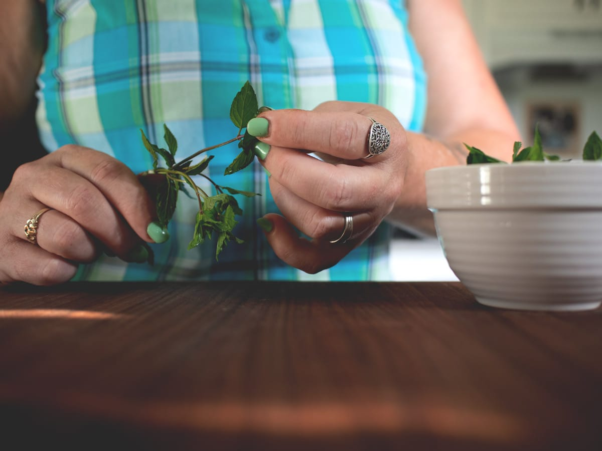 plucking mint leaves from the stems
