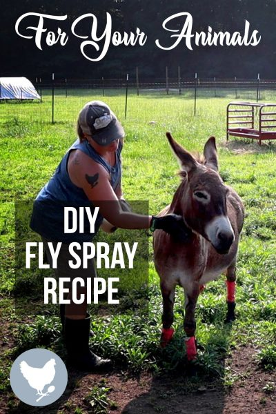 Make your own fly spray at home, to keep those dreaded flies off of your animals. This is the best kind I have made, and it works!